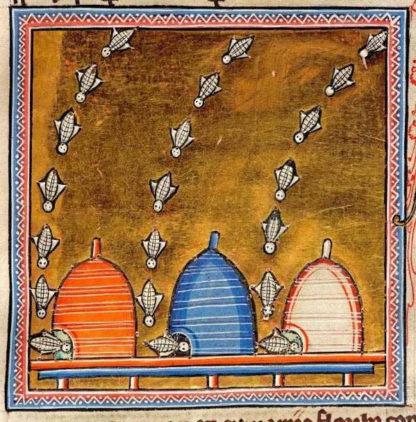 Bees from the Aberdeen bestiary