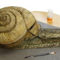 Auzoux Snail