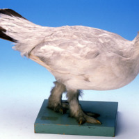 Specimen Bird